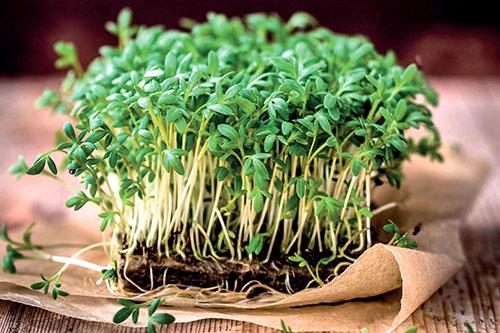 Выращиваем вместе с ребёнком съедобные растения